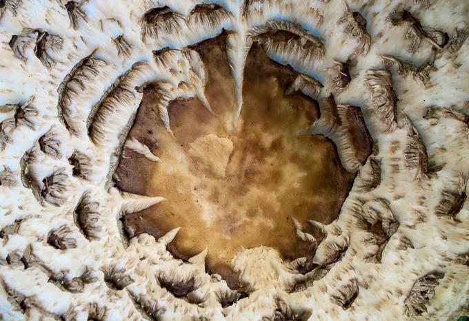 031217 - mushroom1